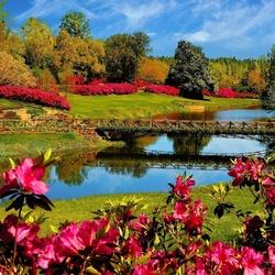 Пазл онлайн: Цветение рододендрона