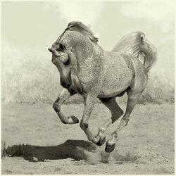 Пазл онлайн: Гарцующая лошадь
