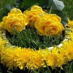 Пазл онлайн: Розы и одуванчики