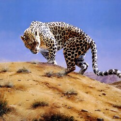 Пазл онлайн: Аравийский леопард