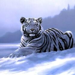 Пазл онлайн: Сибирский тигр