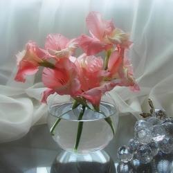 Пазл онлайн: Розовые гладиолусы