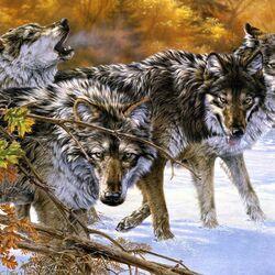 Пазл онлайн: Волчья стая