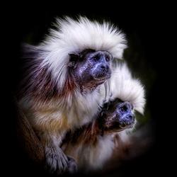 Пазл онлайн: Портреты животных