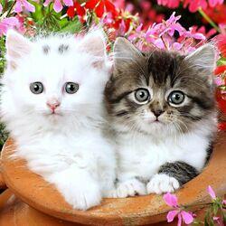 Пазл онлайн: Кошечки в горшке