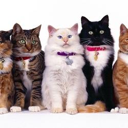 Пазл онлайн: Без кота и жизнь не та...