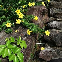 Пазл онлайн: Желтые цветочки