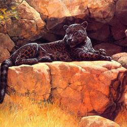 Пазл онлайн: Черный ягуар