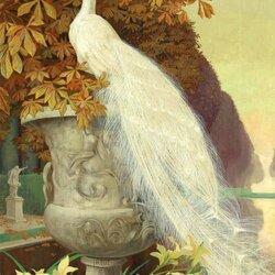Пазл онлайн: Белый павлин