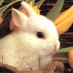 Пазл онлайн: Белый кролик