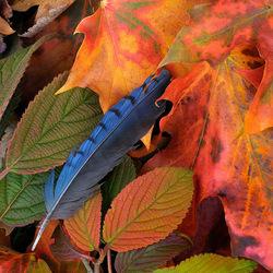 Пазл онлайн: Птицы улетели