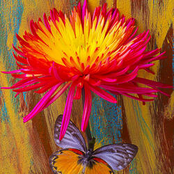 Пазл онлайн: Цветок и бабочка