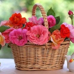 Пазл онлайн: Корзинка роз