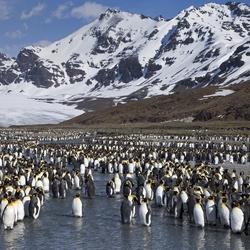Пазл онлайн: Страна пингвинов