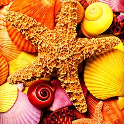 Пазл онлайн: Морские звезды и ракушки