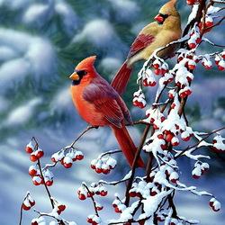 Пазл онлайн: Парочка кардиналов