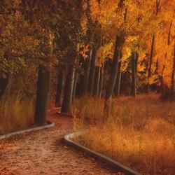 Пазл онлайн: Аллея в осень