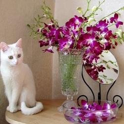 Пазл онлайн: Кошечка и орхидеи