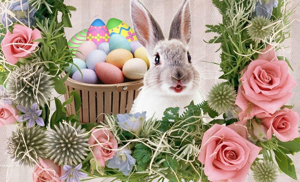 Видео открытка кролику