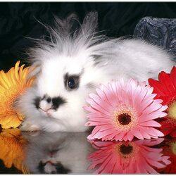 Пазл онлайн: Кролик в герберах