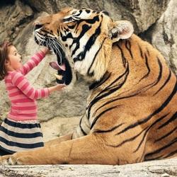 Пазл онлайн: Дантист и тигр
