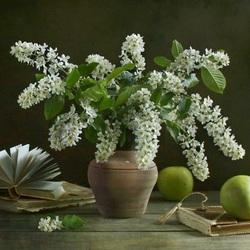 Пазл онлайн: Натюрморт с черёмухой и яблоками