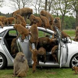 Пазл онлайн: Где водитель ?