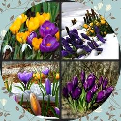 Пазл онлайн: Вестники весны