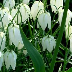 Пазл онлайн: Белые цветочки
