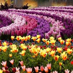 Пазл онлайн: Цветочные поля