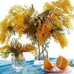 Пазл онлайн: Мимоза и лимон