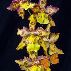 Пазл онлайн: Любимые орхидеи