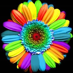Пазл онлайн: Радужный цветок