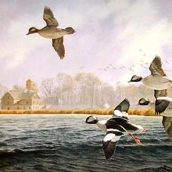 Пазл онлайн: Утки летят