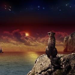 Пазл онлайн: Леопард на скале