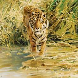Пазл онлайн: Крадущийся тигр