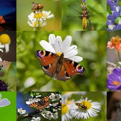 Пазл онлайн: Коллаж насекомые