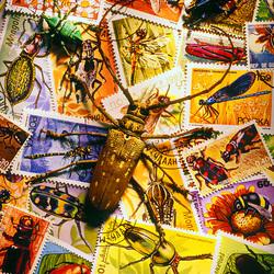 Пазл онлайн: Жуки на почтовых марках