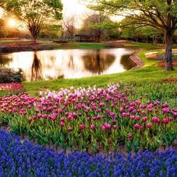 Пазл онлайн: Парковые цветы