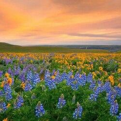 Пазл онлайн: Долина цветов