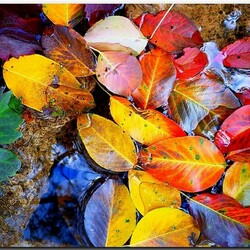Пазл онлайн: Палитра осенних листьев