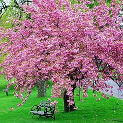 Пазл онлайн: Сады цветут