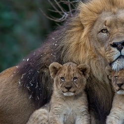 Пазл онлайн: Отец семейства