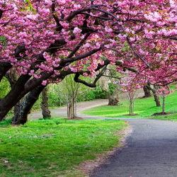 Пазл онлайн: Деревья цветут