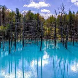 Пазл онлайн: Голубой пруд