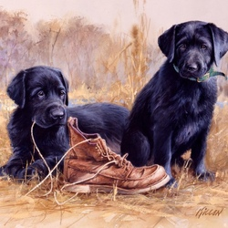 Пазл онлайн: Два щенка