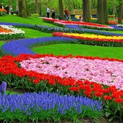 Пазл онлайн: Парк цветов Кёкенхоф