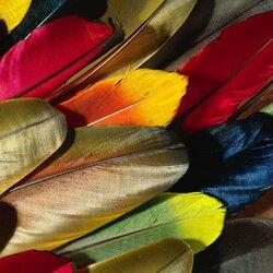 Пазл онлайн: Разноцветные перья
