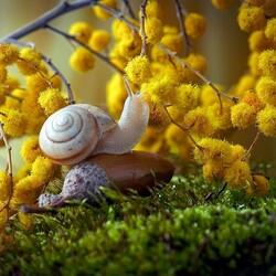 Пазл онлайн: Какой запах