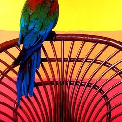 Пазл онлайн: Попугай